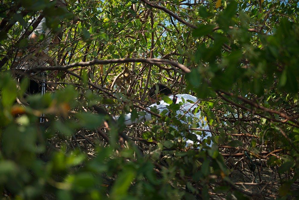 resex cassurubá, imagem de manguezal
