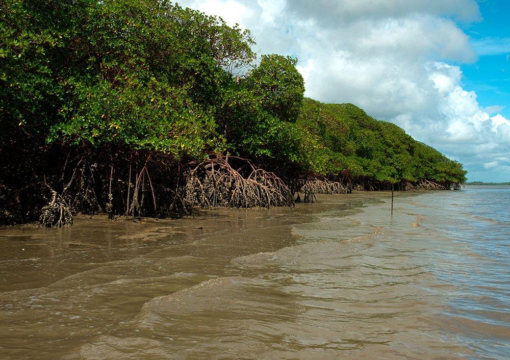 resex cassuruba, imagem de manguezal