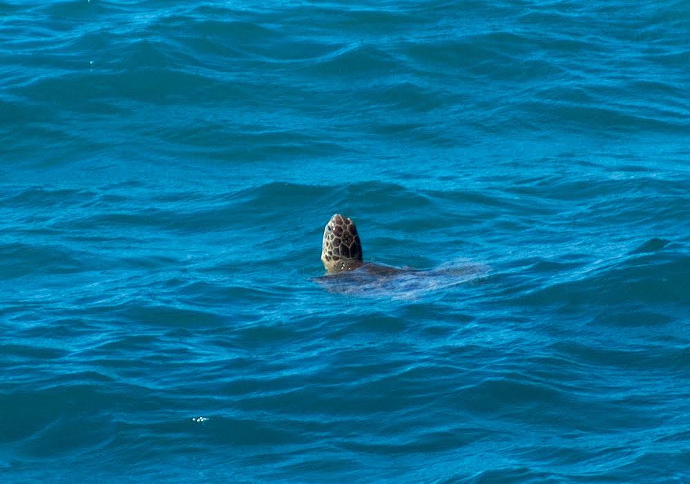 tartaruga no Parque Nacional Marinho dos Abrolhos