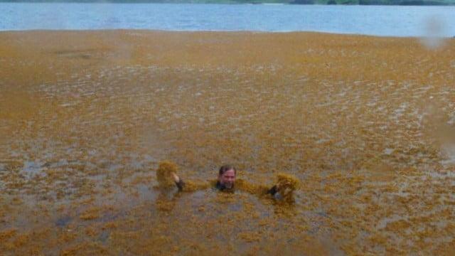 Noronha é invadida por algas