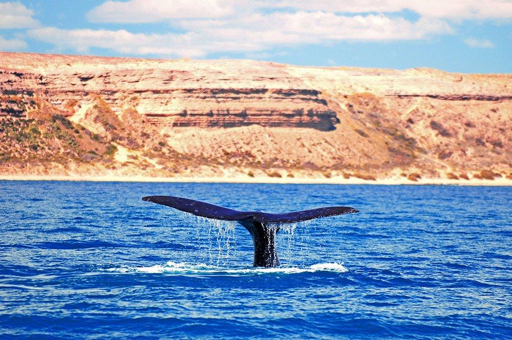 Alonso Irineu Goes,imagem de cauda de baleia