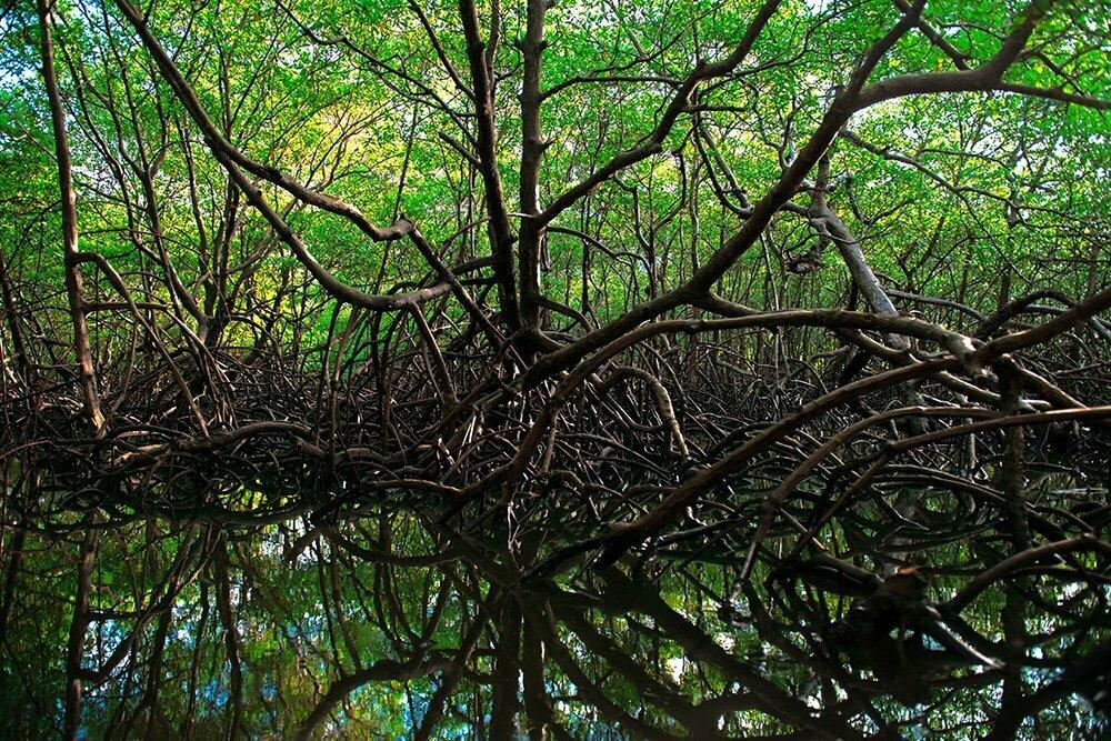 Resex de Canavieiras, imagem do-mangue-canavieiras