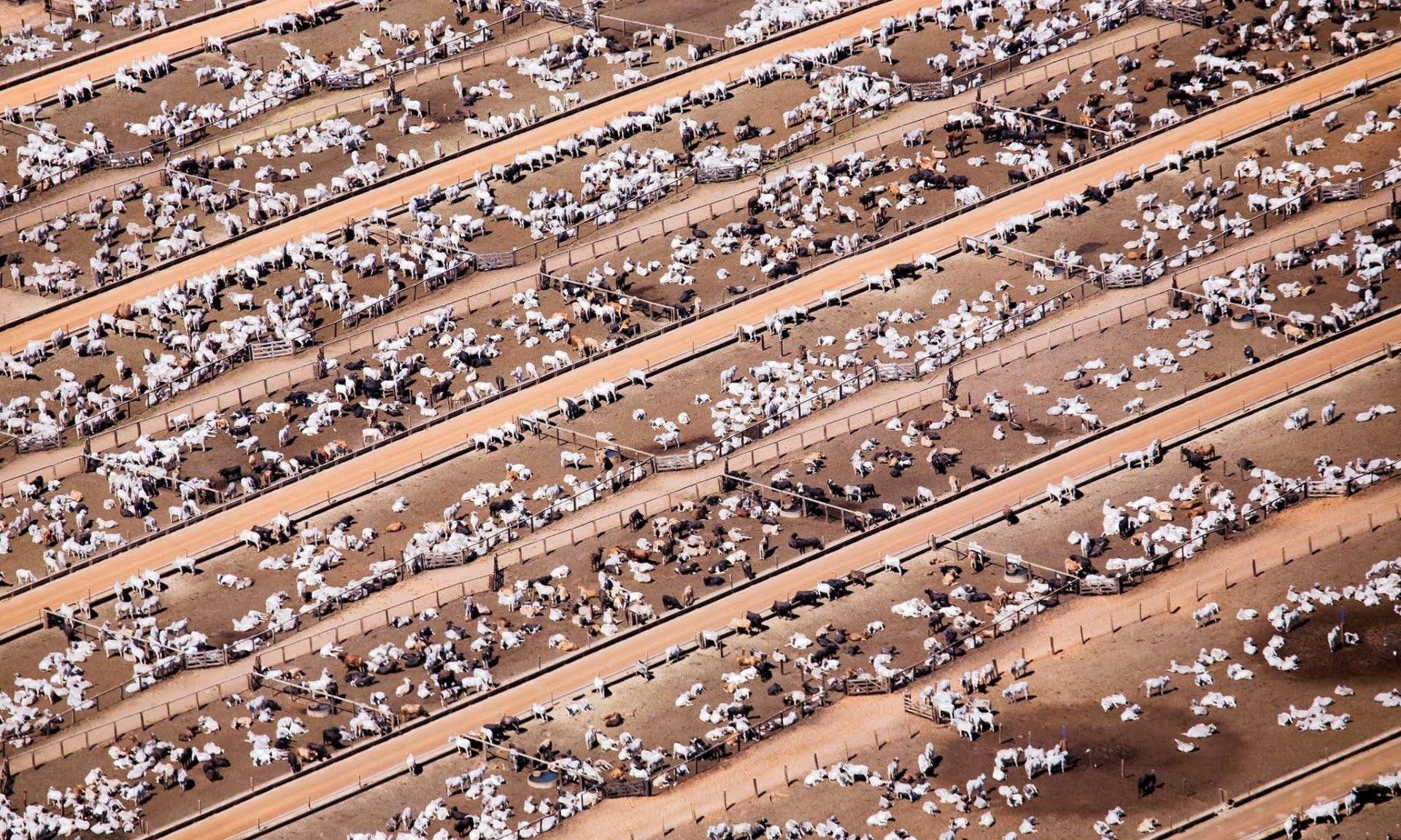Superpopulação e super consumismo, nossa triste realidade, imagem de confinamento de animais