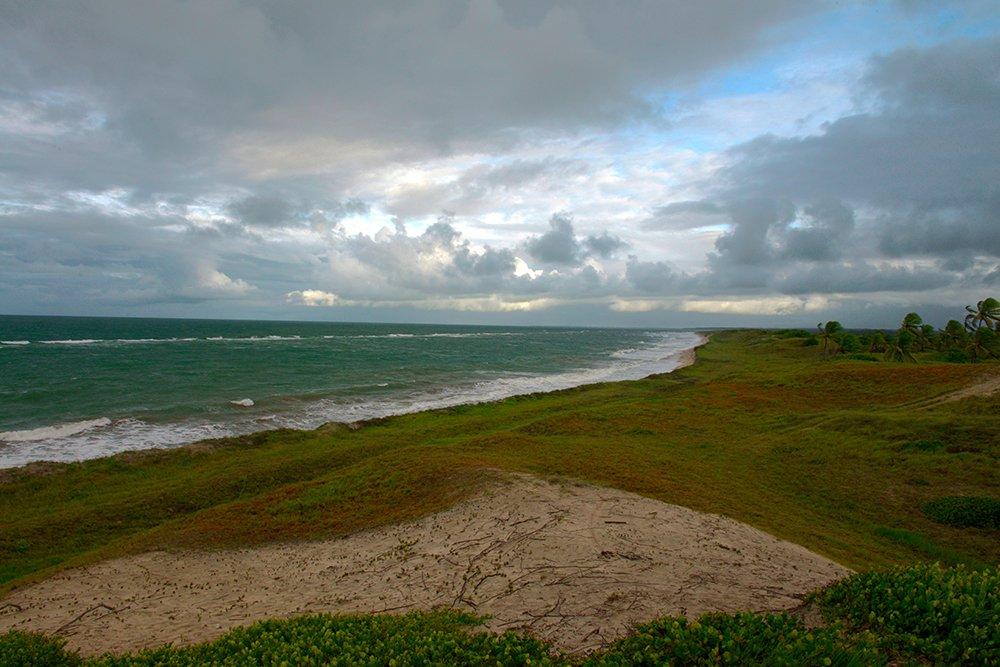 Árie e APA de Mamanguape, imagem de  dunas fixas do litoral norte da Paraíba