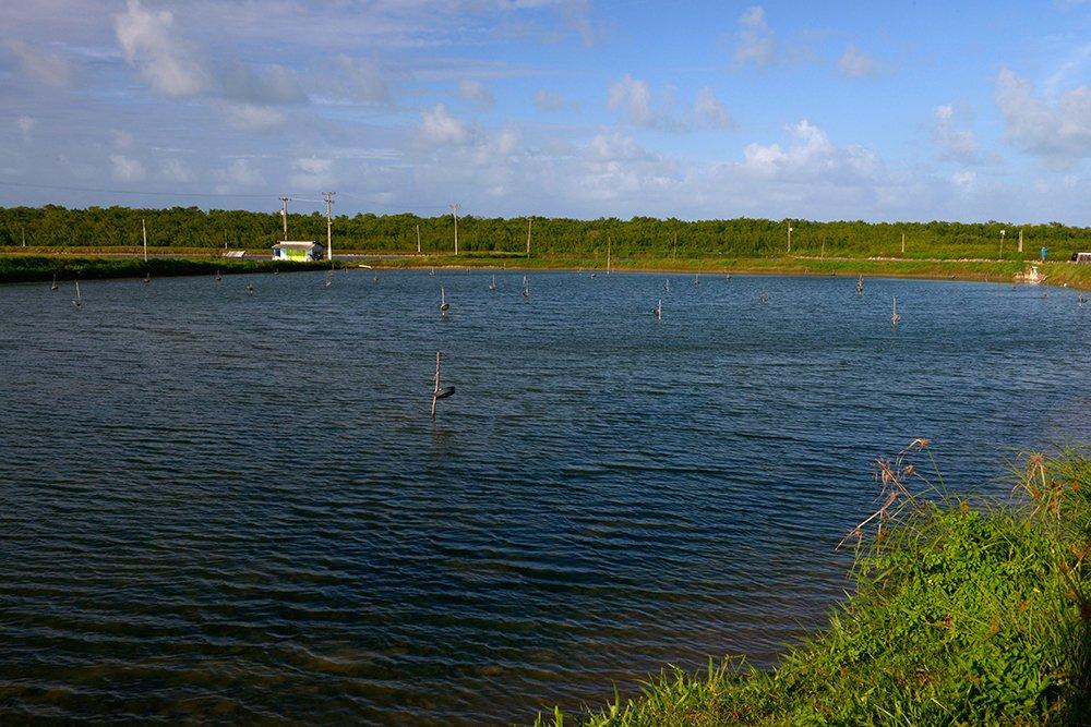 Árie e APA de Mamanguape, imagem de Tanque de camarões em produção