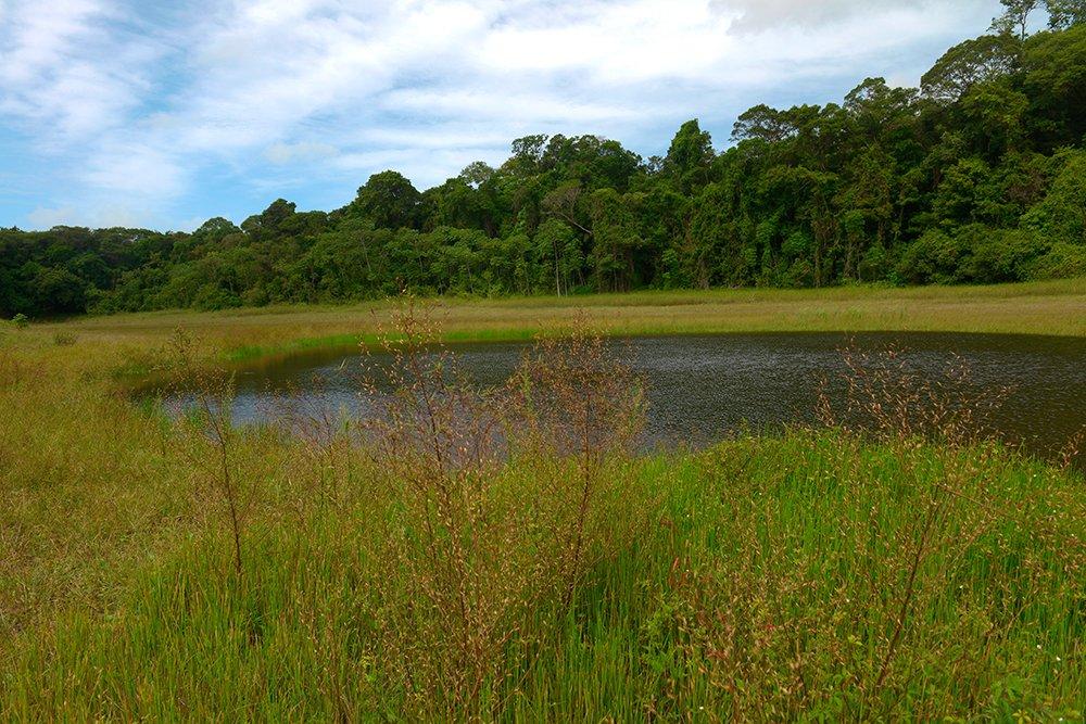 ARIE e APA do Mamanguape, imagem de lagoa