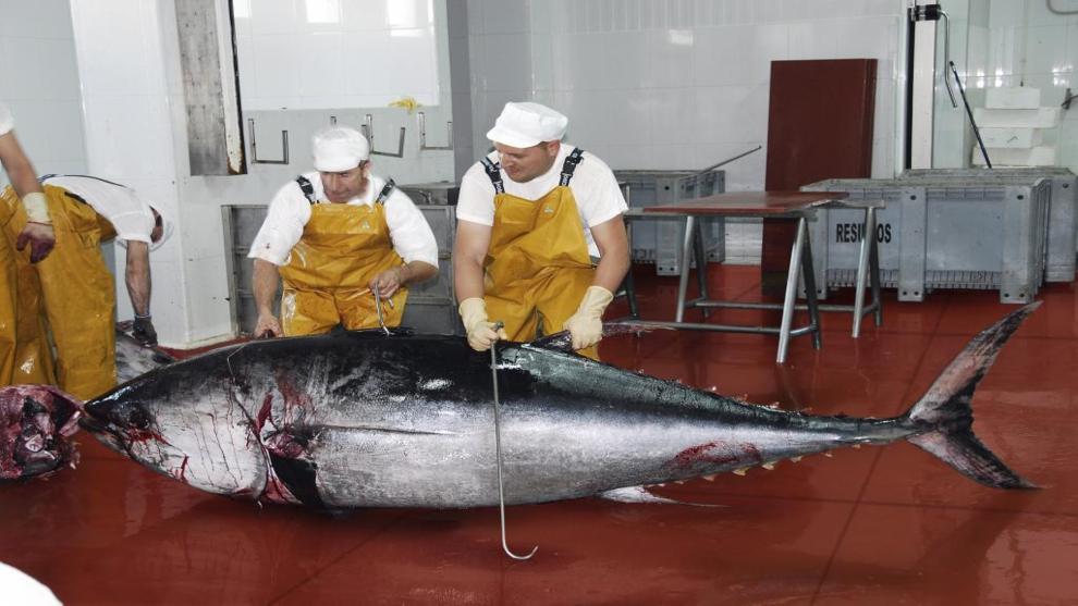 Populações de atum, cavala e bonito estão desaparecendo, imagem de atum no mercado de tokio