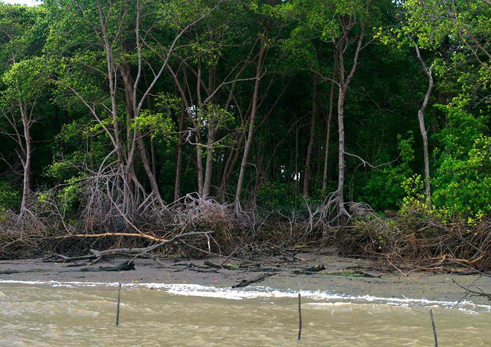 Bilica, coordenador do polo de Limondeua, imagem de manguezal do Pará