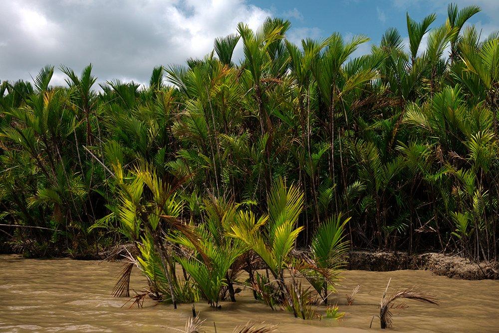 Resex Maracanã e Resex Chocoaré Mato Grosso, imagem de palmeiras na margem do Chocoaré