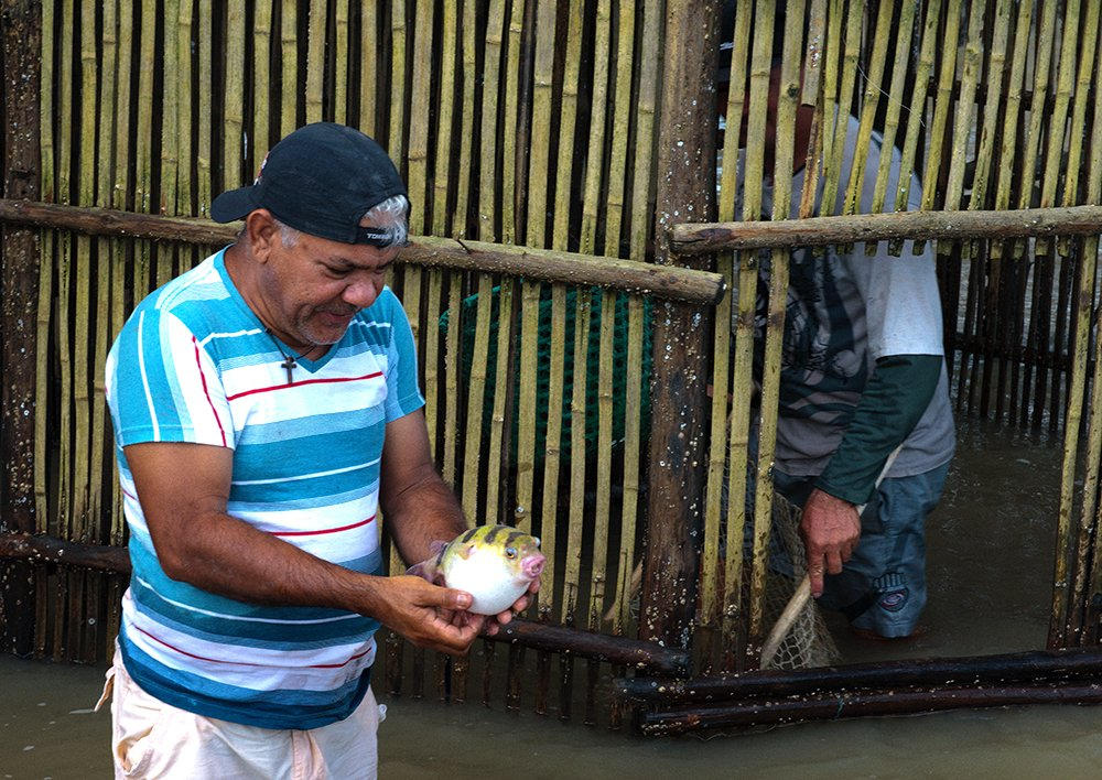 Resex Caeté Taperaçu, imagem de pescador no cerco