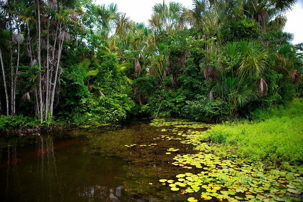 Resex Maracanã e Resex Chocoaré Mato Grosso, imagem de Igarapé da bacia do rio Maracanã