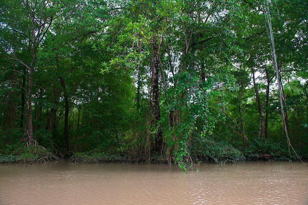 Resex Maracanã e Resex Chocoaré Mato Grosso, imagem de mangue