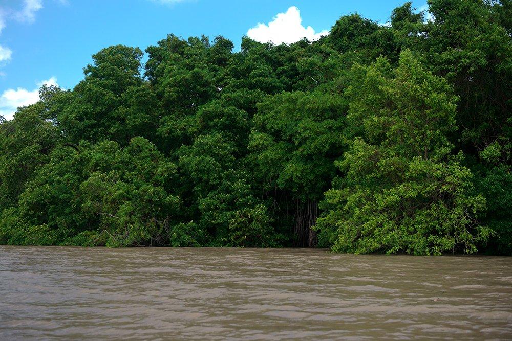 Resex Maracanã e Resex Chocoaré Mato Grosso, imagem do mangue paraense