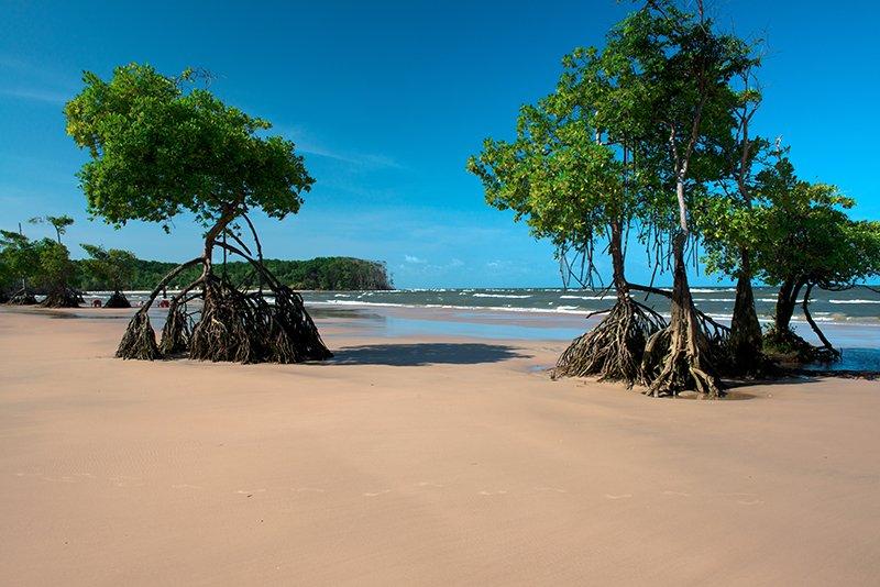 Andrei Cardozo, chefe da UC, imagem de mangue na praia Brava, marajó