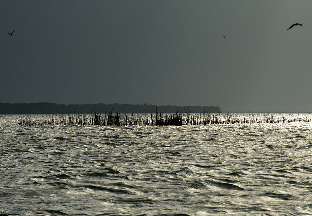 Resex de Cururupu, imagem de um-curral-de pesca na resex cururupu