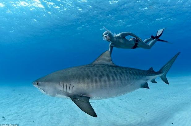 ataque de tubarão em Fernando de Noronha, imagem de mergulhador com tubarão