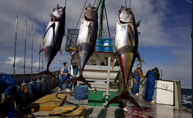 Pesca de atum no mundo, imagem de barco atuneiro