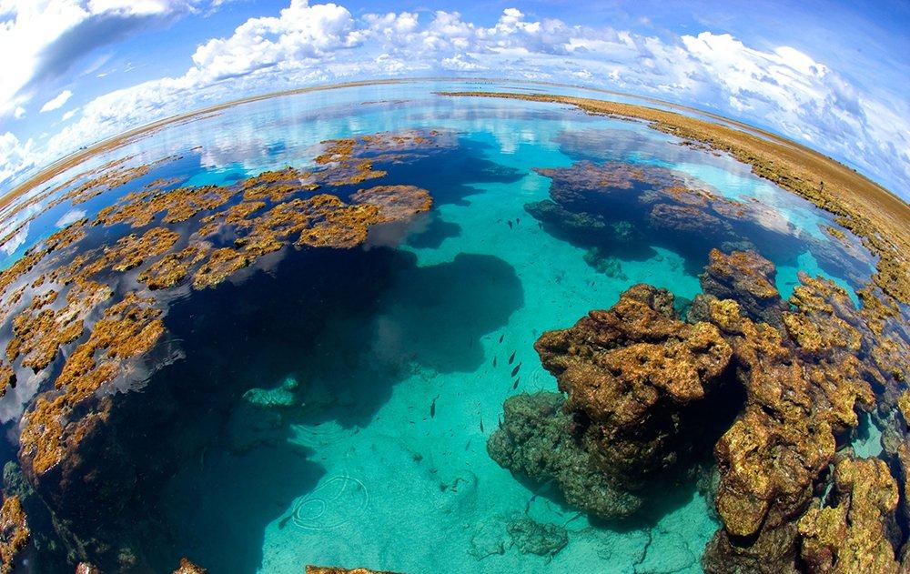 A importância dos corais, imagem do  atol das rocas