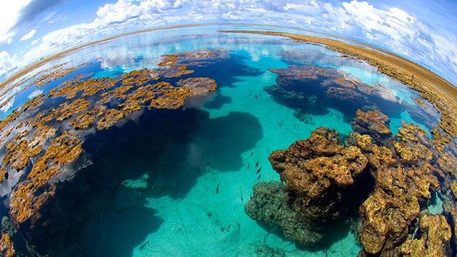 A importância dos corais