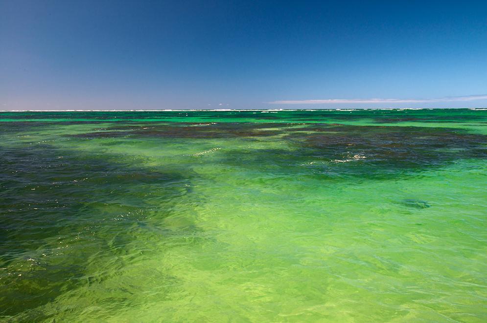 importância dos corais, imagem de corais de Alagoas