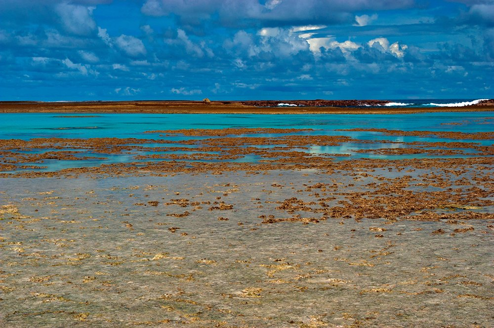 A importância dos corais, imagem de corais no atol das rocas