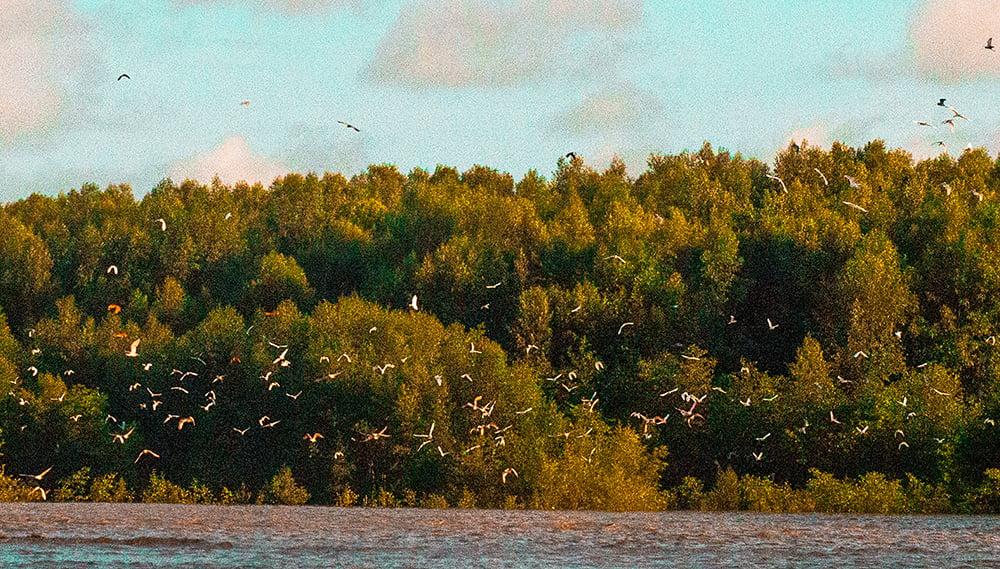 Parque Nacional do Cabo Orange, imagem de bando de aves voando