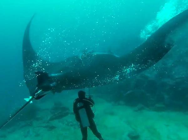 Indonésia cria santuário para raia jamanta, imagem de mergulhadores com raia jamanta