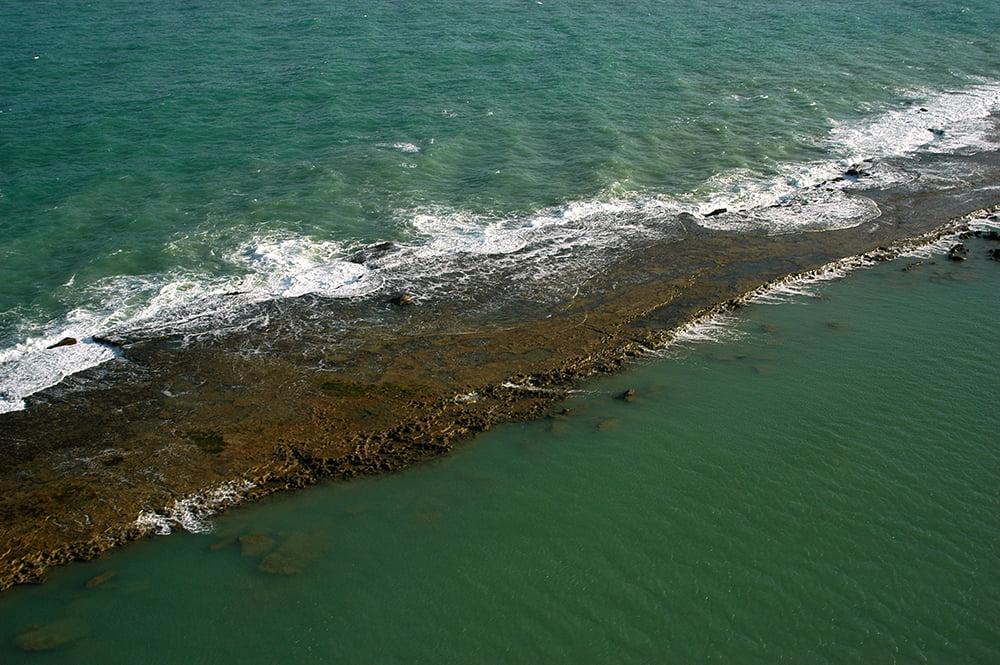 A importância dos corais, imagem de corais