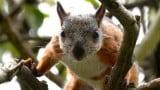 Costa Rica fechará zoológicos e libertará todos os animais