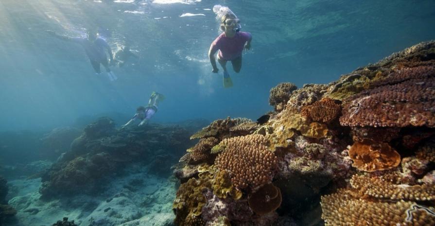 Corais ameaçados, foto de turistas mergulhando entre corais