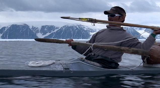 Baleia e o mito do Unicórnio, foto de caçador de narval