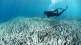 Branqueamento da grande barreira de corais