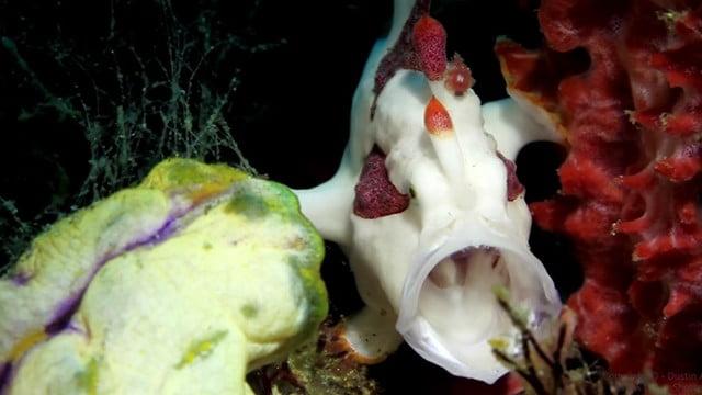 Criaturas marinhas inimagináveis