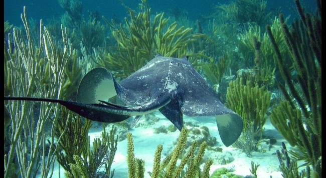 Barreira de Coral Andros, imagem da Barreira de Coral Andros,