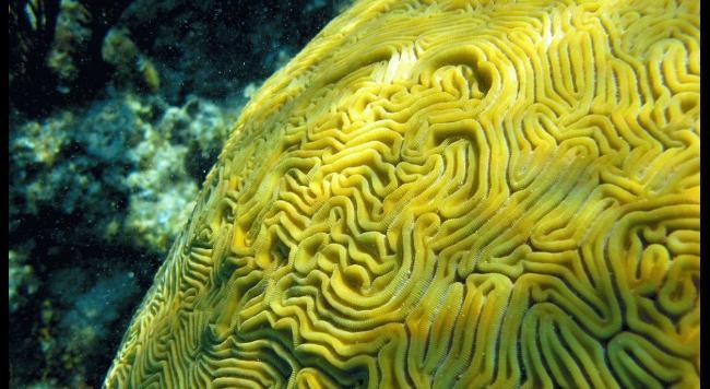 dez corais mais fantásticos, imagem da Barreira de Coral Andros