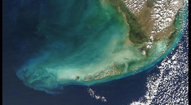 dez corais mais fantásticos, imagem da Barreira de coral em Florida Keys