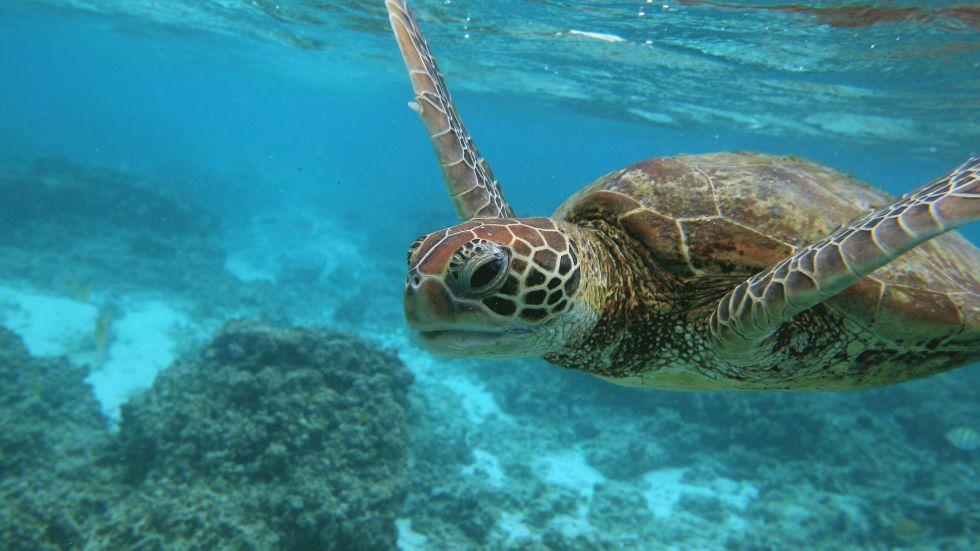 dez corais mais fantásticos, imagem dos recifes da grande barreira de corais