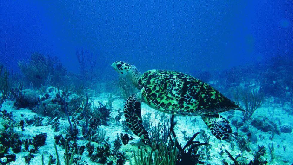 reefs-mesoamerican-4_980x551-2