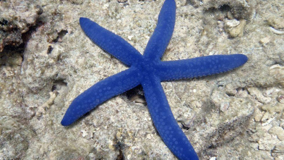 dez corais mais fantásticos, imagem dos recifes da nova caledonia-