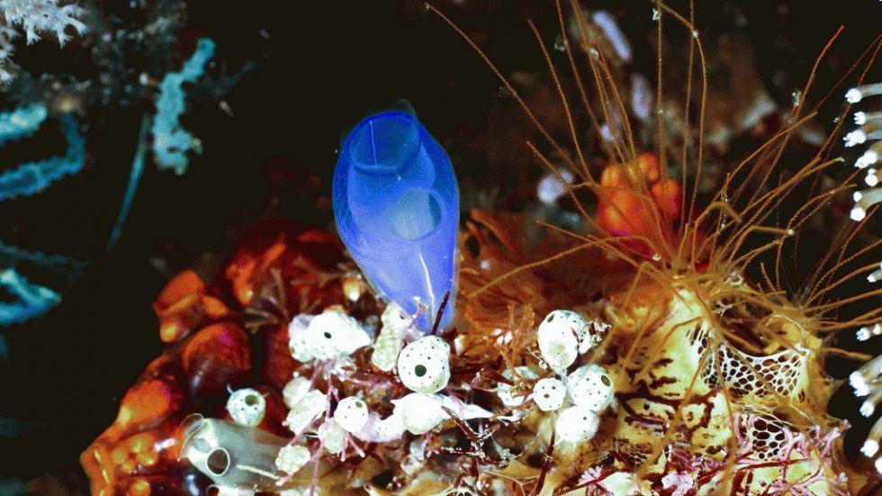dez corais mais fantásticos, imagem de recifes raja-ampat-
