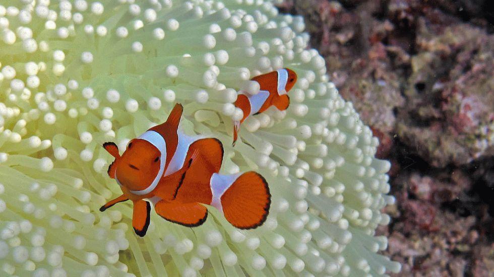 dez corais mais fantásticos, imagem dos recifes raja-ampat