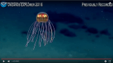 Imagens do fundo do mar, assista ao vivo