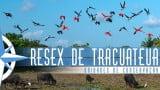 Episódio 52 – Reserva Extrativista de Tracuateua