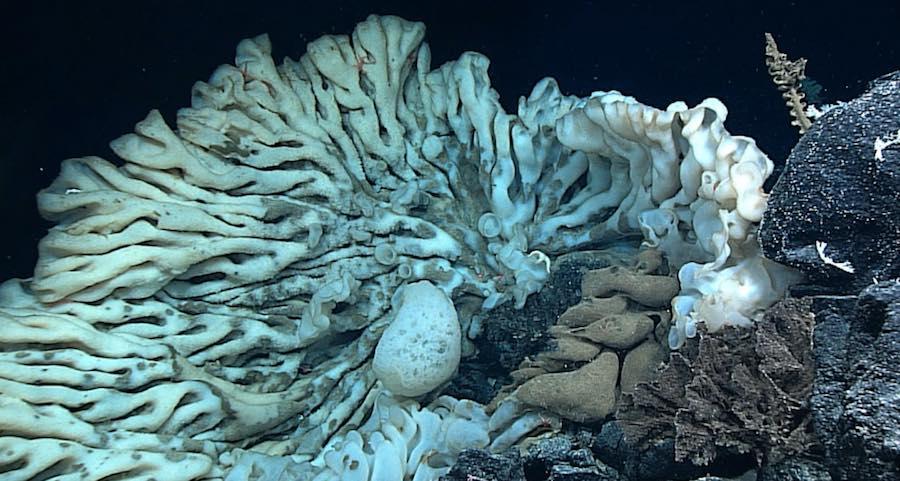 maior esponja do mundo