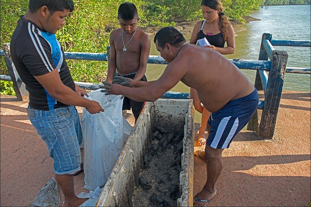 Pesca artesanal: sustentável, ou falácia?, imagem de pescadores embalando caranguejos
