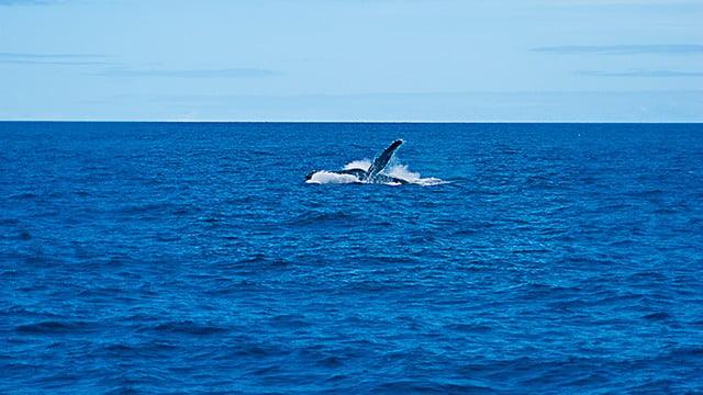 MMA se adianta sobre santuário de baleias