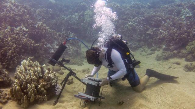 Cientistas conseguem filmar comportamento dos corais