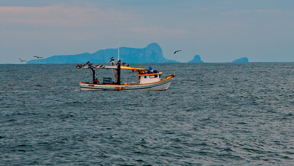Alcatrazes é Revis, imagem de barco de pesca e alcatrazes
