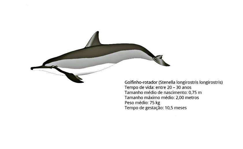 Projeto Golfinho Rotador, imagem de um desenho de um golfinho rogador