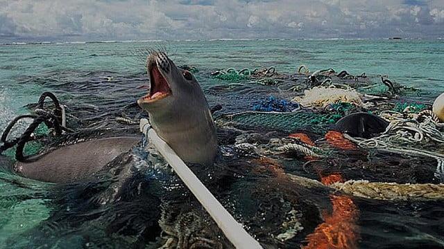 Mancha de lixo do Pacífico e portas de saída
